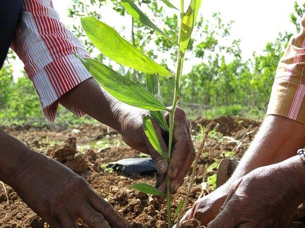 Conoce el ciclo de la reforestación en árboles
